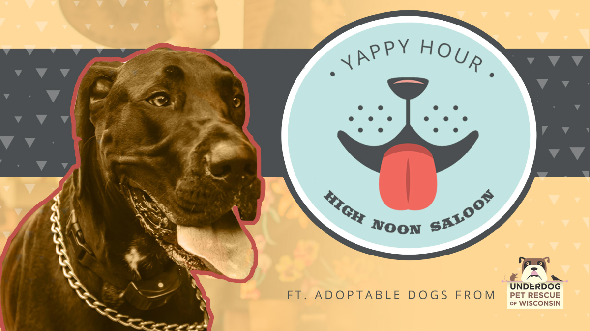 Yappy Hour with Underdog Pet Rescue at High Noon Saloon